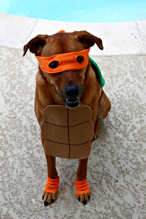 Easy DIY Costume for dogs Ninja turtle