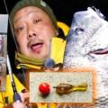 チヌ-クロダイ-キビレゲームの新リグ!チヌ釣るやつを使った遊動式底ズル系リグを紹介【武田栄 考案】