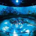 【関西15水族館まとめ】夏休みだ!水族館イベントを網羅してみました。
