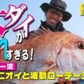 折本隆由の最新タイラバ実釣動画を配信中!食わせ系ヘッド「TGアクラバヘッドクワセ」や味とニオイの「熟成タイラバアクア」などの効きっぷりも必見