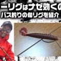 フリーリグはナゼ効くの? バス釣りでオススメの旬リグを紹介!寄稿by小谷野慶太