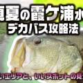真夏の霞ケ浦のバス釣り!デカバス捕獲のヒント【寄稿by横川隼大】