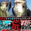 琵琶湖でギル型マグナムクランク炸裂!「小南ギルウチワ」荒釣れのコツを実釣解説