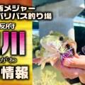 関西メジャーバス釣り場「淀川」オカッパリ最新現場レポート!激アツエリアや釣り方を紹介