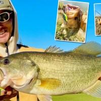 水野浩聡が解説!今の時期にデカバスを狙って獲れる「フィーディングの釣り」とは