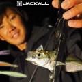 【アジング基本講座】アジにオススメなジャッカルの人気ワーム3種を杉山代悟が解説