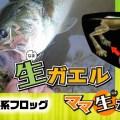 【生ガエルとママ生ガエル】ギミック満載!Vivaのリアルシルエット系フロッグを紹介