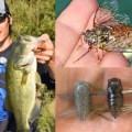 夏のバス釣りでワーム系セミルアー「ムシーン1.25inch」が最強だと考える理由とは?