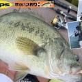 【放っておけば喰う】その力、もはやエサ。デプス「ワカサギベイト」琵琶湖の特殊なワカサギパターン