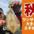 秋イカにはワンサイズ大きなエギから使ってみるべし
