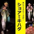【堤防からキハダ】釣りYoutuber「あんこうアワーズ」が起こした奇跡!!