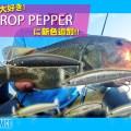 プロップペッパーしか勝たん!ティムコの悪魔的トップウォーター「プロップペッパー」に新色追加!