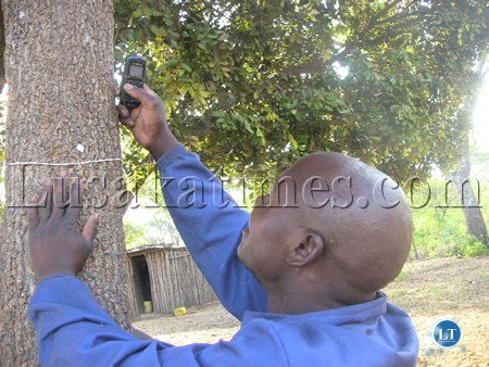 A man searching for cell phone network signal up a tree