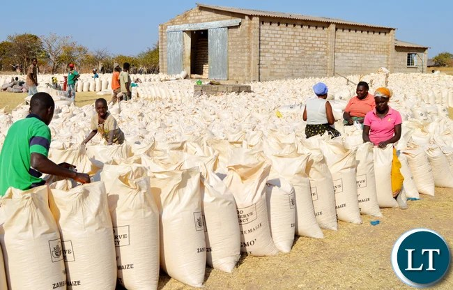 Farmers in Moyo chiefdom of Pemba district found knitting the 50 Kilogrammes bags of maize for sell at one of the Food Reserve Agency depots in the area.