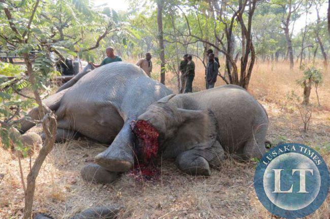 Elephants killed in Kafue National park