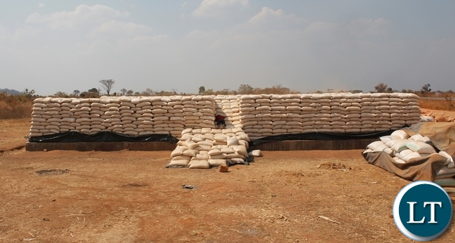 A stack of over 14, 000 bags of maize purchased by FRA at Chipoka satellite depot since the marketing season exercise commenced.