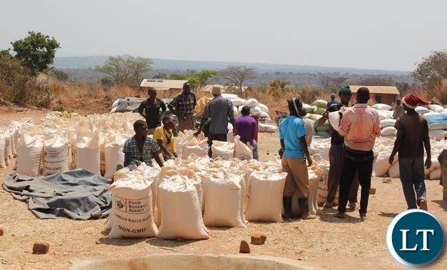 Farmers rebagging their maize at Kamuswazi Satellite depot