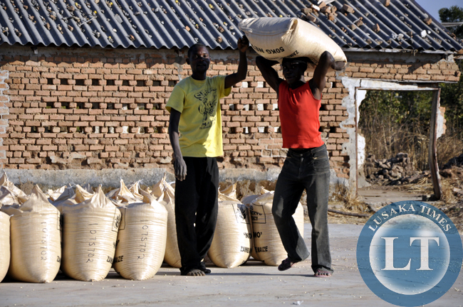 Peasant farmers load their maize into a truck before transportation to an FRA depot in chief Mulala's area. Agriculture faces manay challenges in the area and this fuels poverty.