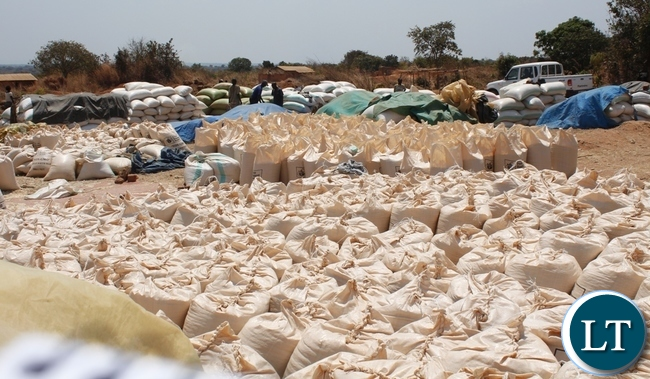 Re-bagged sacks of maize awaiting FRA officials to buy from farmers