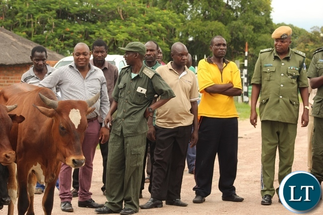 Western Province Police Commissioner Charles Lungu (r) inspecting some of the 14 recovered cattle after a police operation in Limulunga District