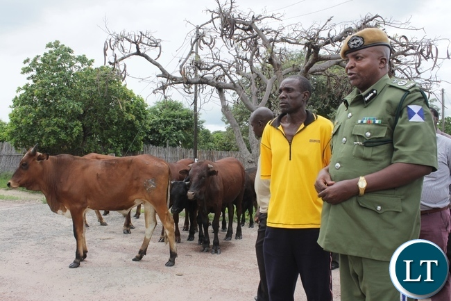 Western Province Police Commissioner Charles Lungu (r) issuing an official statement about the 14 recovered cattle after a police operation in Limulunga District