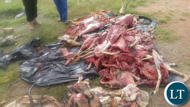 Terry Mulombwanyama, 18, of Mulombwanyama Village, chief Mulemdema and Joel Chonga Mbote,34, a worker at Mukombo Lodge, of Muyanga Village, chief Kabulwebulwe were arrested after being found with eight Impalas and two Pukus carcasses all weighing 207kgs