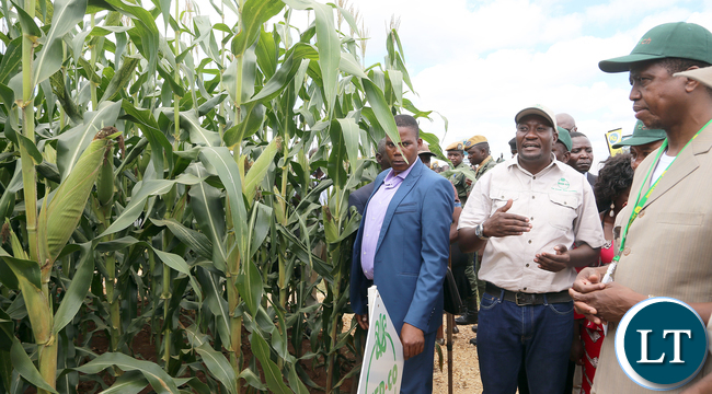 President Edgar Lungu on tour of stands at SEEDCO  Maize Field  during  Agrictech Expo in Chisamba with  the visiting Czech Republic  agric Minister Mr Marian Jurecja and Minister Given Lubinda at Agrictech Expo in  at GART Research Centre in Chisamba  on Friday- PICTURE BY EDDIE MWANALEZA/STATEHOUSE.