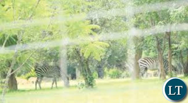Part of Ndambo's farm estate in Chongwe