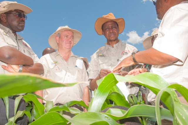 President Edgar Chagwa Lungu inspects maize at Zambeef's Huntley Farm in Chisamba during the launch of the 2016/17 planting season, accompanied Zambeef Joint Chief Executive Officer Francis Grogan and Acting Agriculture Minister Dr Chitalu Chilufya.