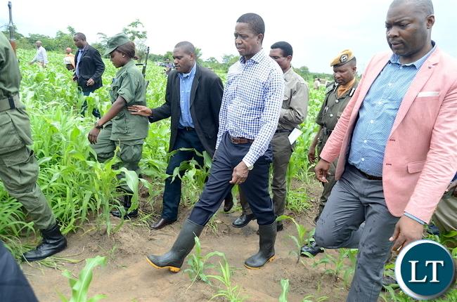 President Lungu inspects one of the maize fields affected by the army worms in Kanfinsa area in Kitwe on Thursday, January 5,2016-Pictures by THOMAS NSAMA