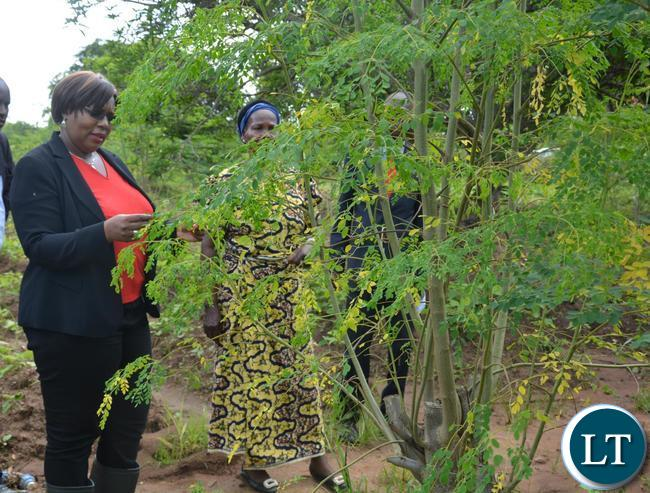 """Minister of Agriculture Dora Siliya(l) admiring the Molinga Tree when she toured Melania Chipungu(r)""""s Farm in Ibex Hill Extension"""