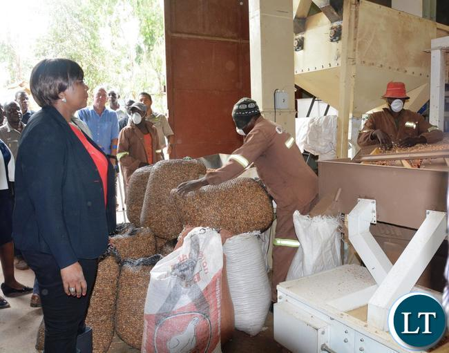 Minister of Agriculture Dora Silaya admiring the Groundnuts during the tour of the Grain Storage Solution