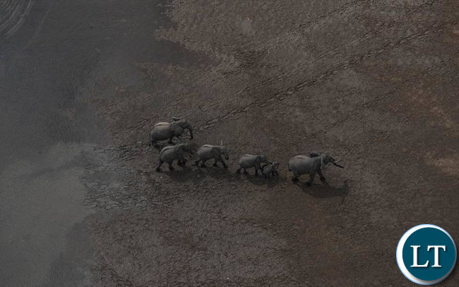 Aerial view of an animal conservation area captured using drones
