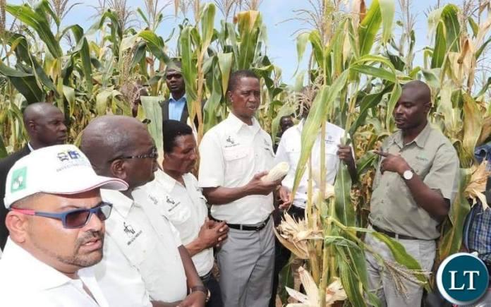 President Lungu during the National Field Day in Kapisha, Chief Mibenge's area in Mansa