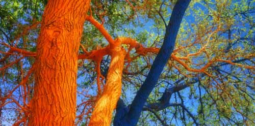 Bright Painting Ideas for Decorating Trees Creative