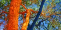 Bright Painting Ideas for Decorating Trees, Creative ...