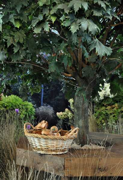 top 10 trends in backyard landscaping