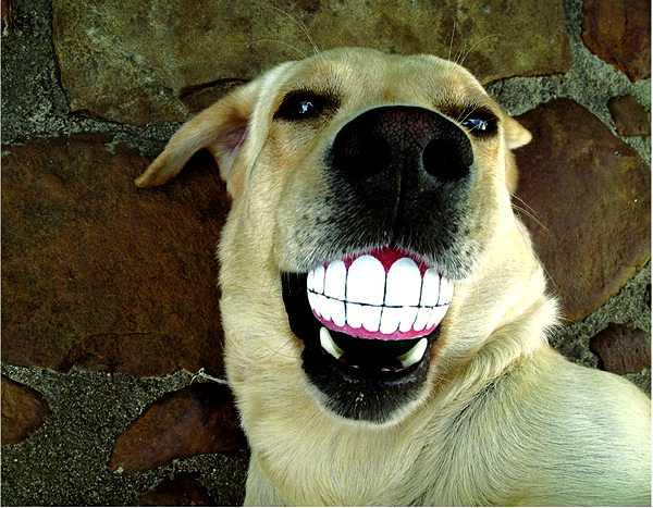 Rogz Grinz Smiling Dog Ball Toys Pet Design Idea that