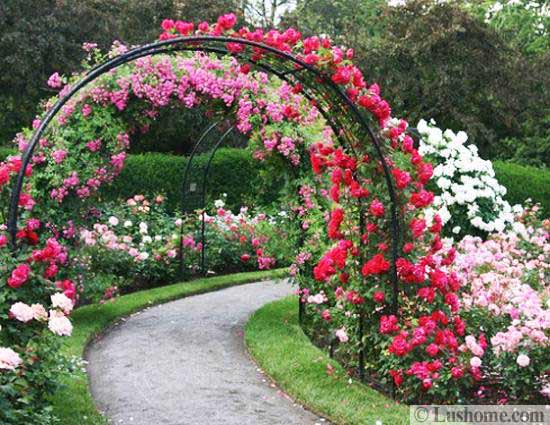 metal arches and beautiful yard