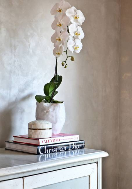 Sophisticated Orchids for Elegant Interior Decorating and