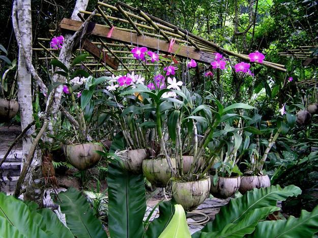 30 Beautiful Ideas for Exotic Garden Design and Backyard