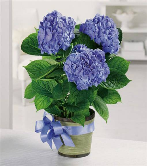 25 Hydrangea Flower Arrangements for Interior Decorating and Home Staging