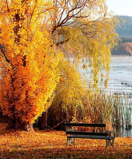 Fall Leaves Decorating Gardens And Backyards For Outdoor