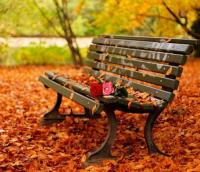Fall Leaves Decorating Gardens and Backyards for Outdoor ...
