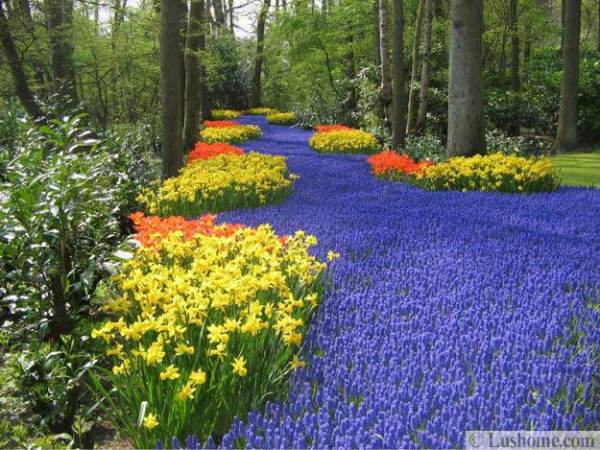colorful spring flowers and yard