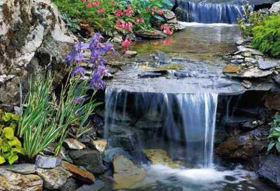 Simple Backyard Ponds