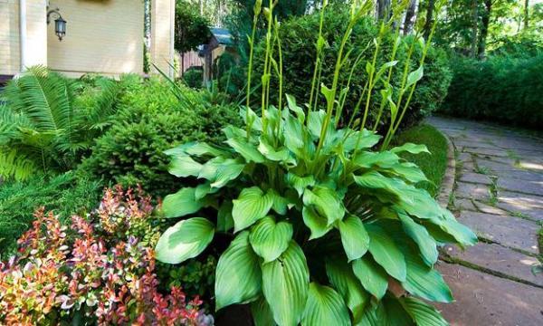 ideas beautiful garden design