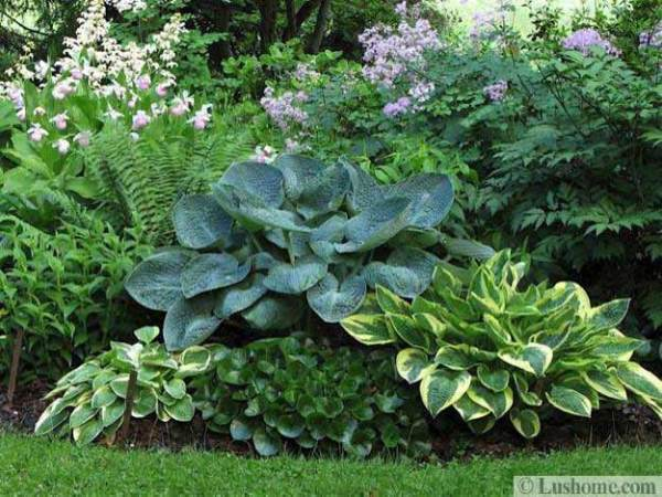 ideas beautiful garden design