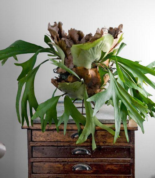 Large Indoor Plants Sale