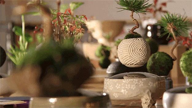 Air Bonsai Floating Tree